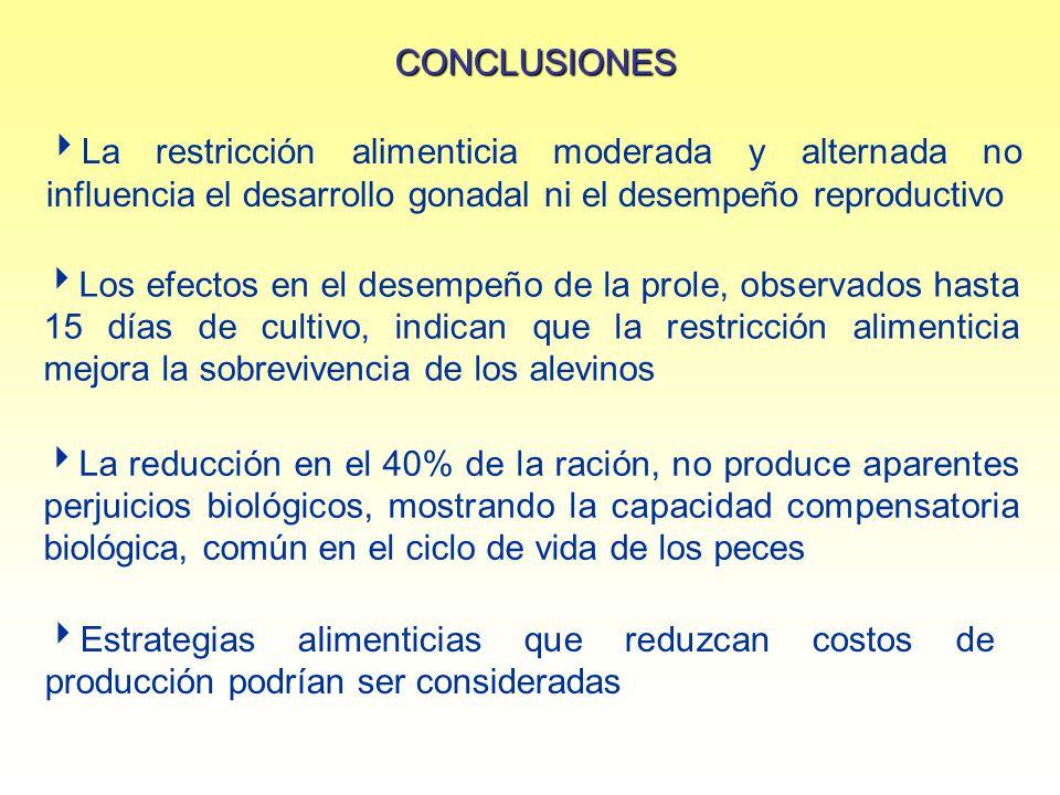 CONCLUSIONES La restricción alimenticia moderada y alternada no influencia el desarrollo gonadal ni el desempeño reproductivo Estrategias alimenticias