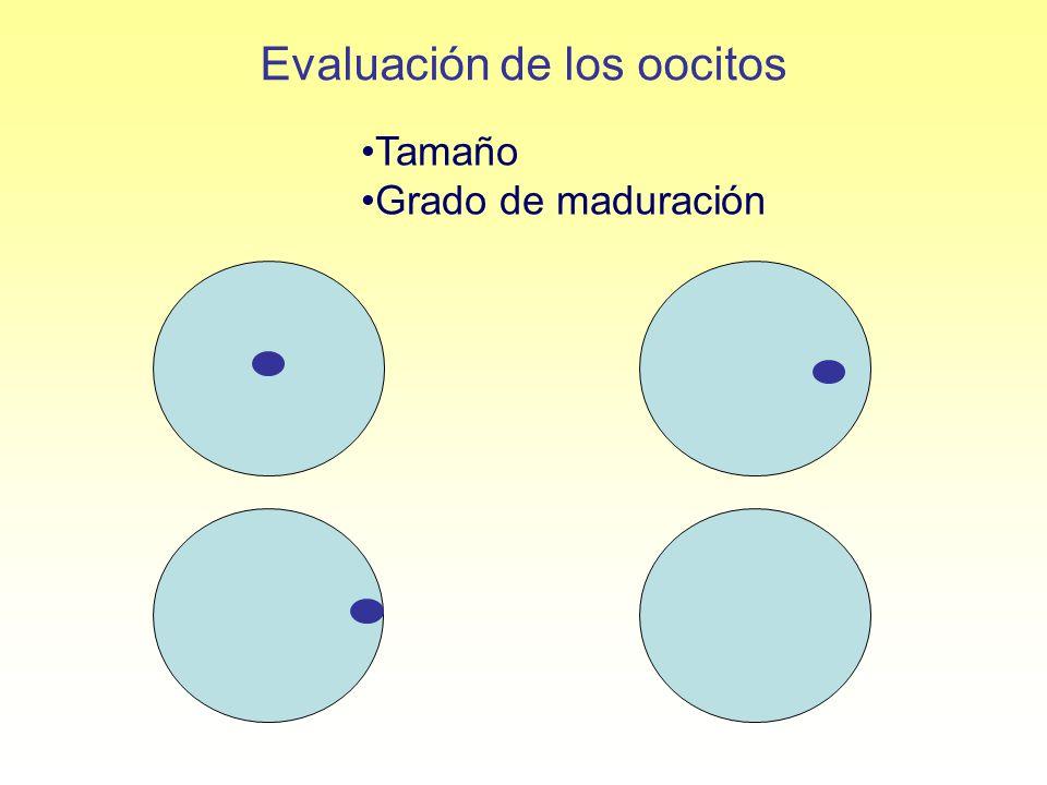 Evaluación de los oocitos Tamaño Grado de maduración