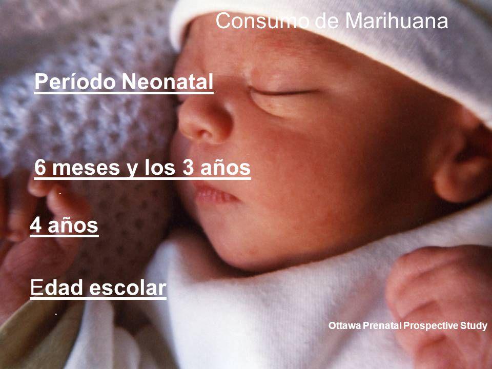 6 meses y los 3 años. Consumo de Marihuana Período Neonatal 4 años Edad escolar. Ottawa Prenatal Prospective Study