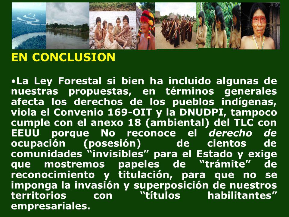 La Ley Forestal si bien ha incluido algunas de nuestras propuestas, en términos generales afecta los derechos de los pueblos indígenas, viola el Conve