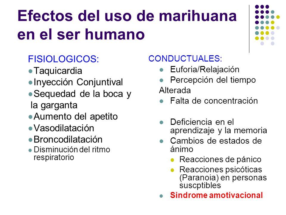 Planta de cannabis atrae notoriedad y controversia Su uso ha sido planteado como ultimo recurso para enfermedades en las que los recursos médicos y fa