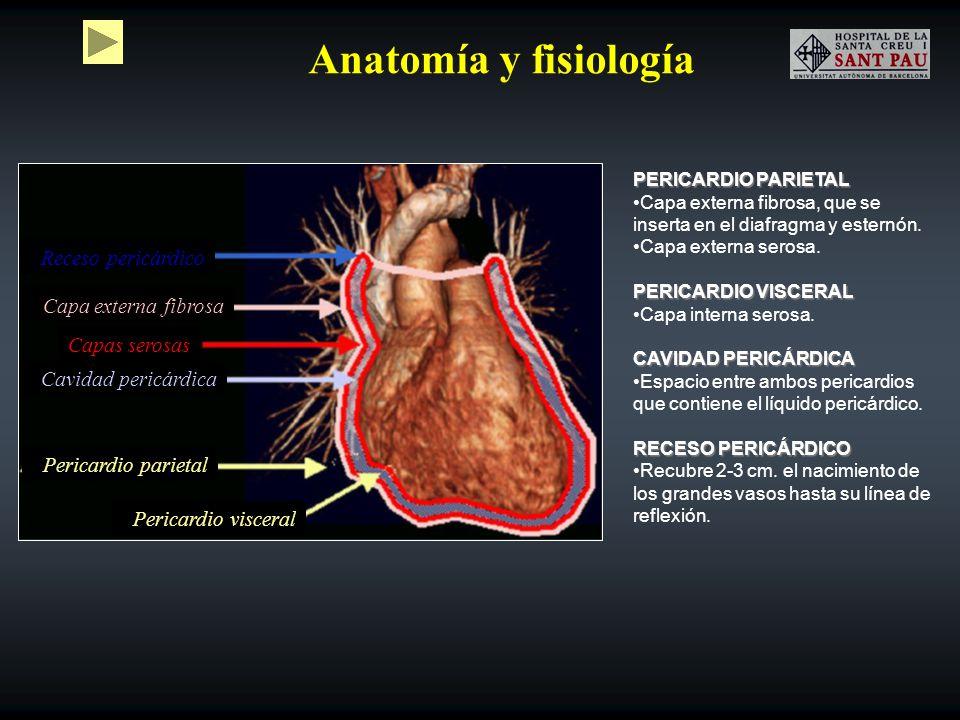 Anatomía y fisiología PERICARDIO PARIETAL Capa externa fibrosa, que se inserta en el diafragma y esternón. Capa externa serosa. PERICARDIO VISCERAL Ca