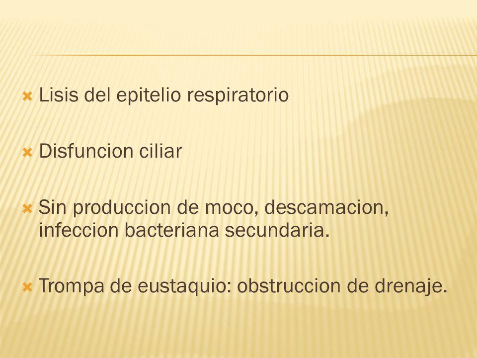Lisis del epitelio respiratorio Disfuncion ciliar Sin produccion de moco, descamacion, infeccion bacteriana secundaria.
