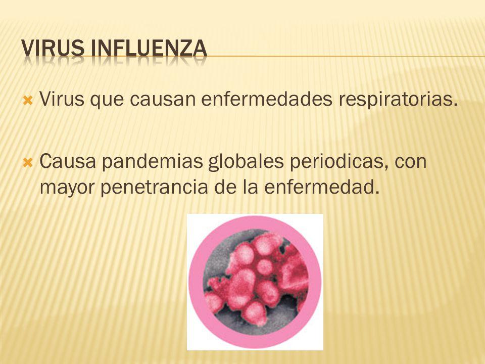 Virus que causan enfermedades respiratorias.