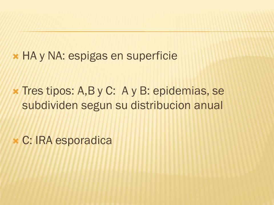 HA y NA: espigas en superficie Tres tipos: A,B y C: A y B: epidemias, se subdividen segun su distribucion anual C: IRA esporadica