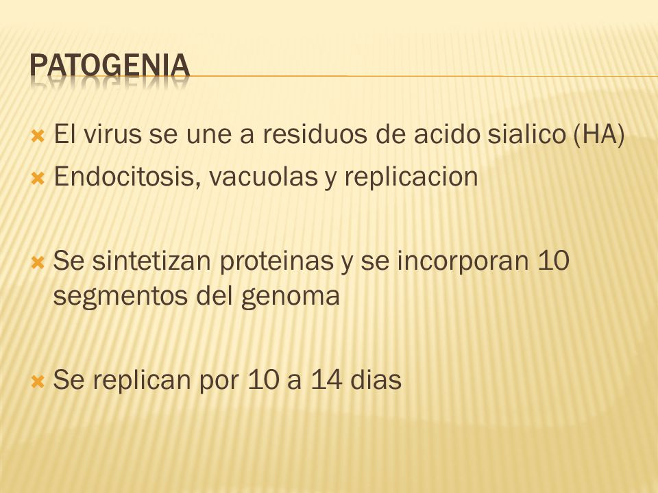 El virus se une a residuos de acido sialico (HA) Endocitosis, vacuolas y replicacion Se sintetizan proteinas y se incorporan 10 segmentos del genoma Se replican por 10 a 14 dias