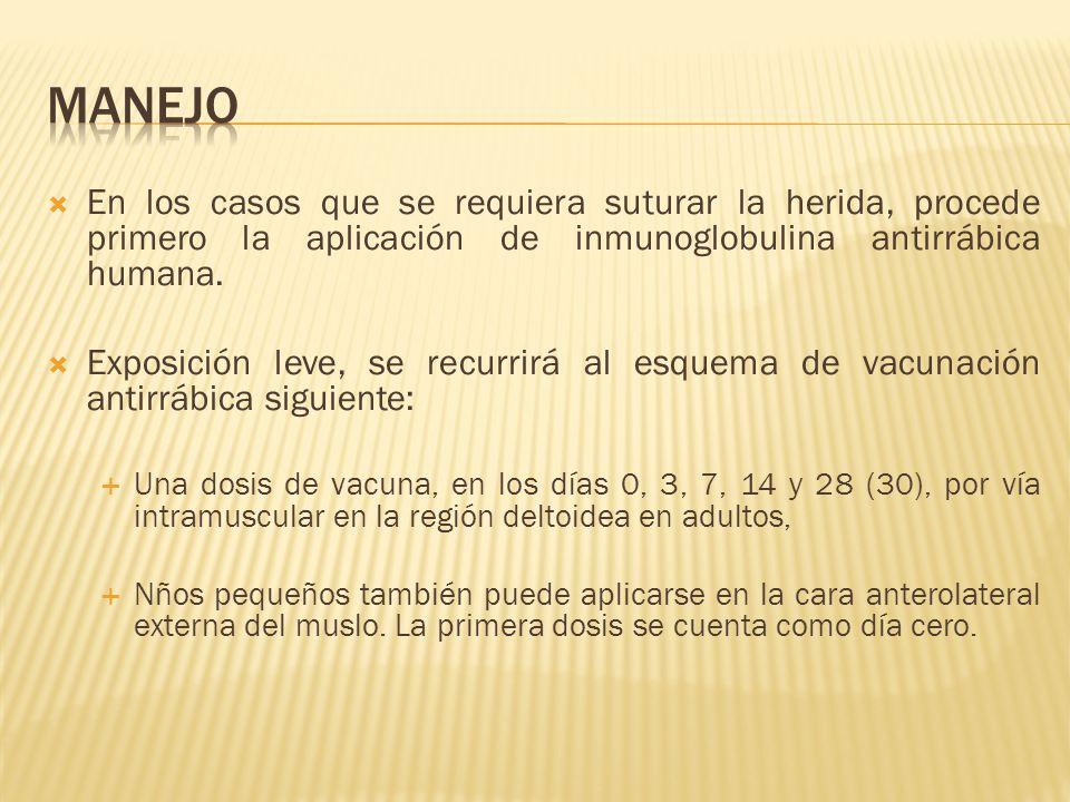 En los casos que se requiera suturar la herida, procede primero la aplicación de inmunoglobulina antirrábica humana. Exposición leve, se recurrirá al