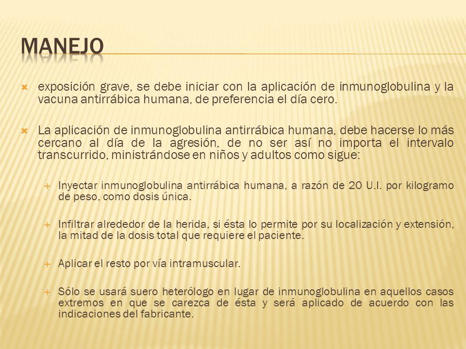 exposición grave, se debe iniciar con la aplicación de inmunoglobulina y la vacuna antirrábica humana, de preferencia el día cero. La aplicación de in