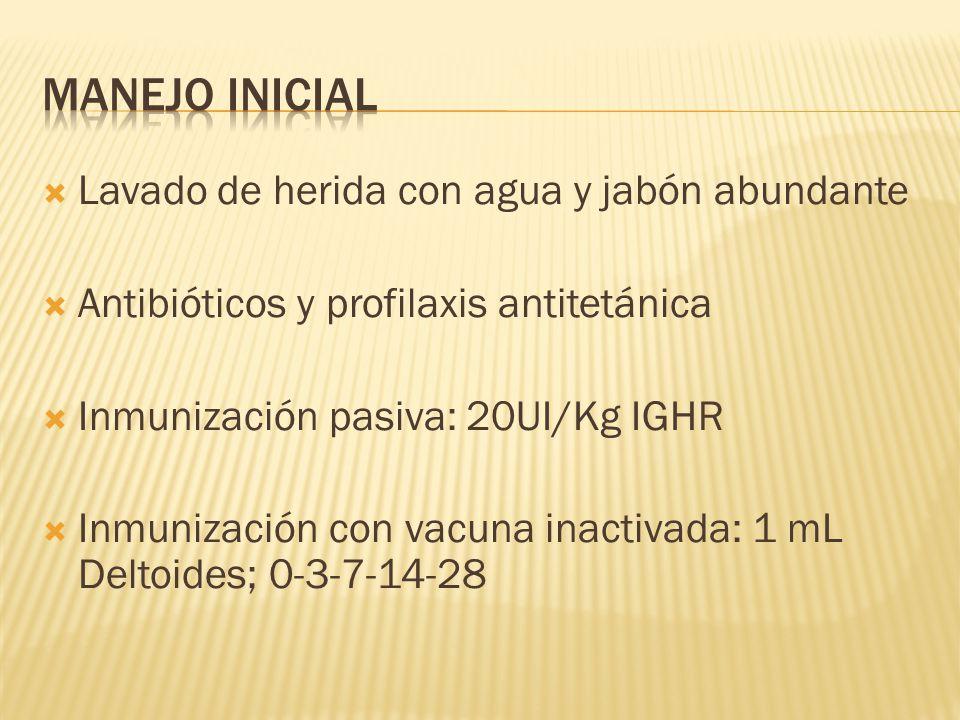 Lavado de herida con agua y jabón abundante Antibióticos y profilaxis antitetánica Inmunización pasiva: 20UI/Kg IGHR Inmunización con vacuna inactivad