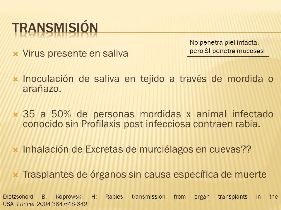 Virus presente en saliva Inoculación de saliva en tejido a través de mordida o arañazo. 35 a 50% de personas mordidas x animal infectado conocido sin