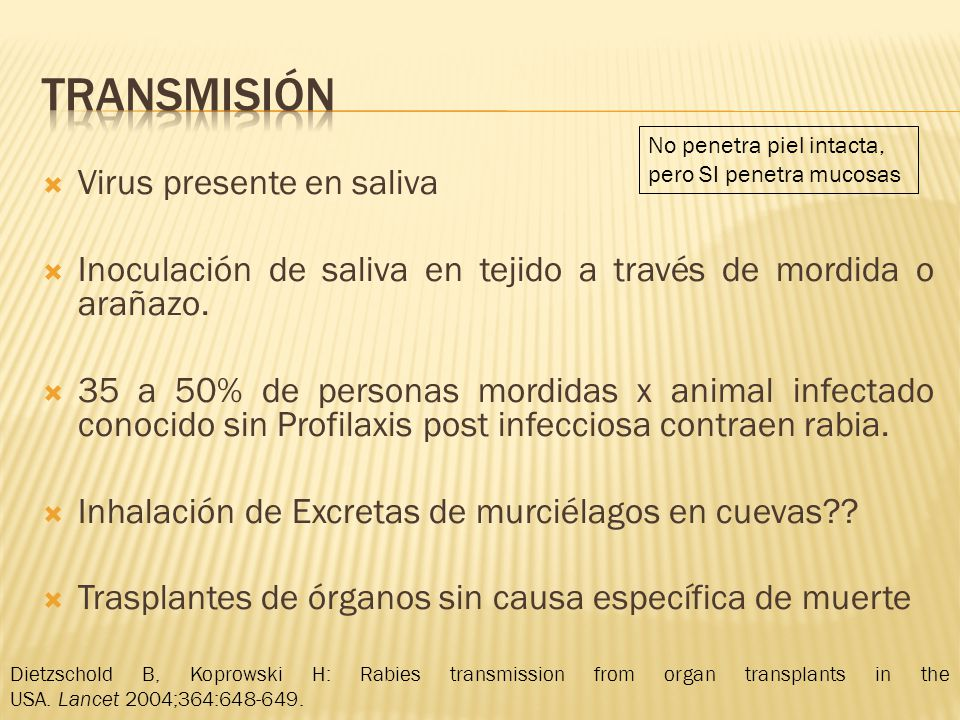 musculo Nervios periféricos (Receptores nicotínicos de acetil colina) Lafon M: Bat rabies-The Achilles heel of a viral killer.