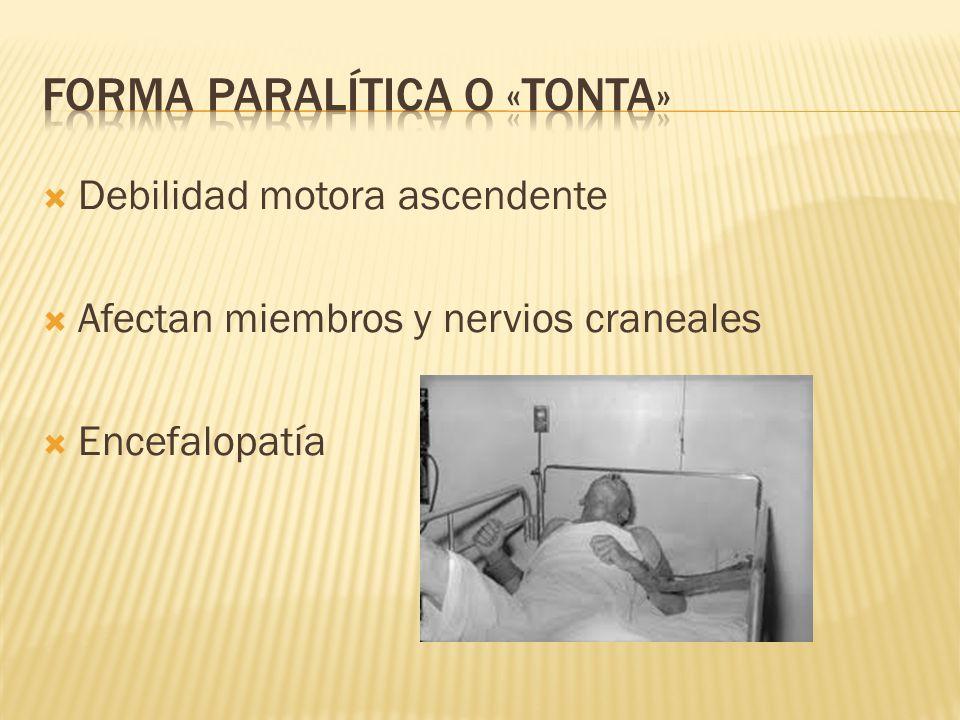 Debilidad motora ascendente Afectan miembros y nervios craneales Encefalopatía
