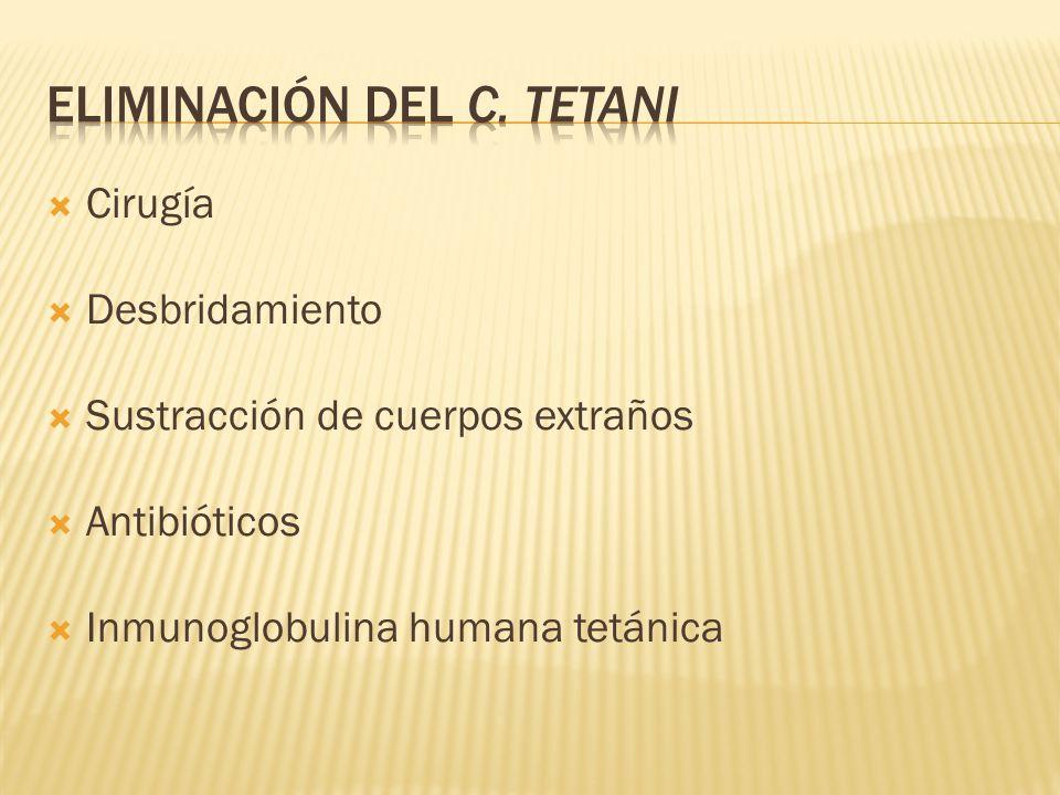 Cirugía Desbridamiento Sustracción de cuerpos extraños Antibióticos Inmunoglobulina humana tetánica