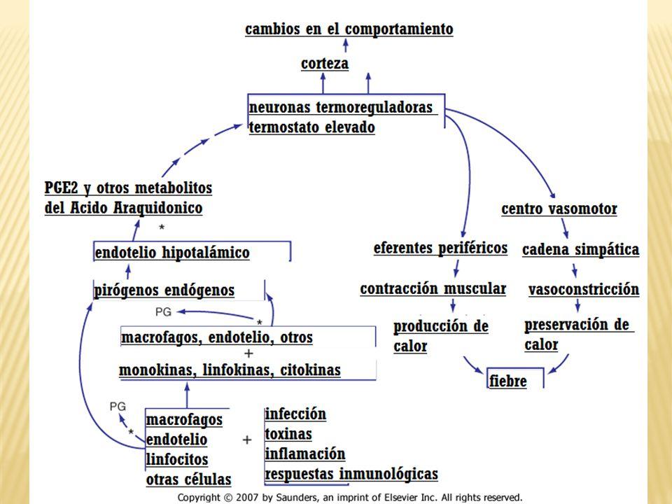 Infección Vacunas Agentes biológicos IL`s, INF`s, FEC de macrofagos y granulocitos Lesión tisular Malignidad Auto-inducción Facticia Fármacos Drogas Enfermedades reumatológicas Enfermedades inflamatorias Granulomatosas Endocrinológicas Metabólicas geneticas