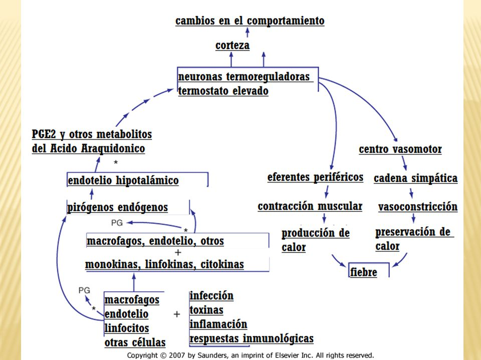 Inhibidores de ciclo-oxigenasa Acetaminofeno 10 a 15mg/Kg dosis c/4 hrs (tempra - tylenol) Cido acetil salisilic?: Aspirina, ASA.