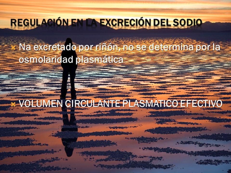 Na excretado por riñón, no se determina por la osmolaridad plasmática Na excretado por riñón, no se determina por la osmolaridad plasmática VOLUMEN CIRCULANTE PLASMATICO EFECTIVO VOLUMEN CIRCULANTE PLASMATICO EFECTIVO