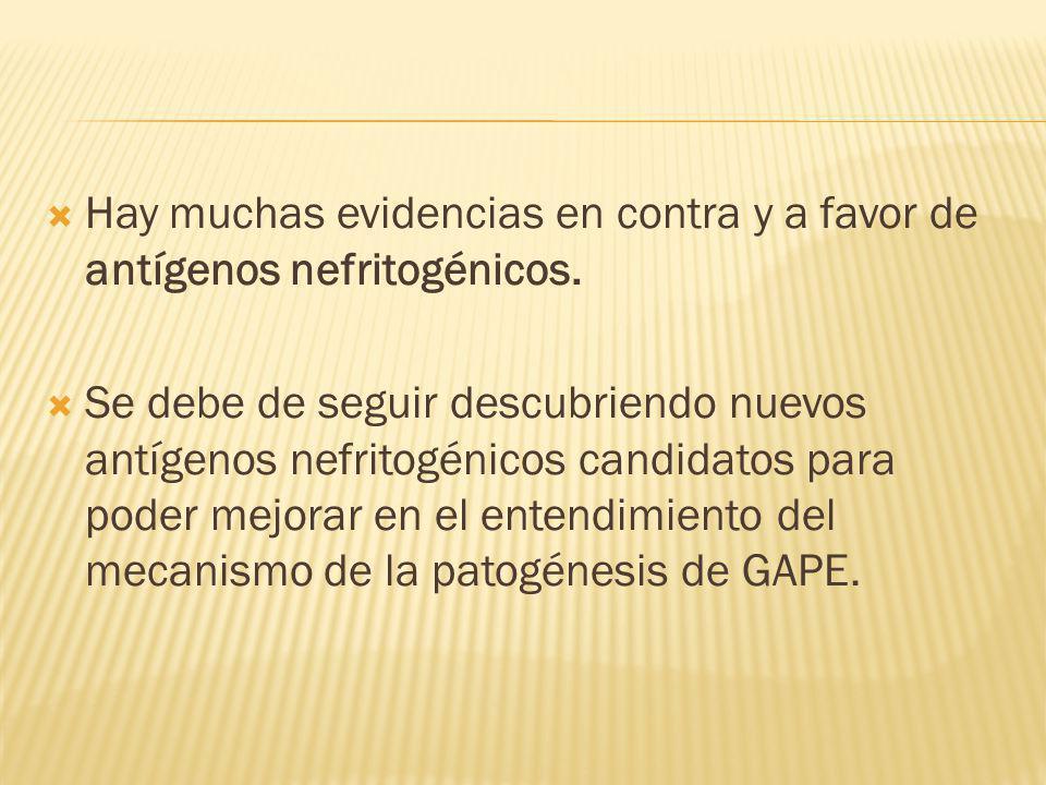 Hay muchas evidencias en contra y a favor de antígenos nefritogénicos. Se debe de seguir descubriendo nuevos antígenos nefritogénicos candidatos para
