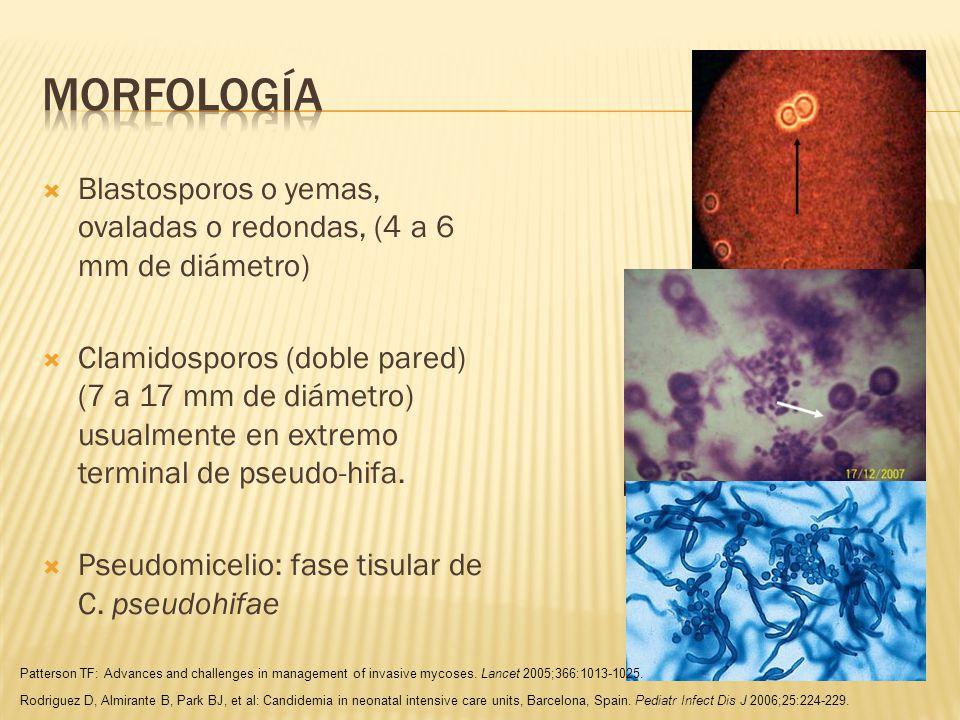 Candidiasis oral, dermatitis del pañal 3 formas clínicas: Candidiasis atrófica: eritema difuso con pérdida de papilas linguales.