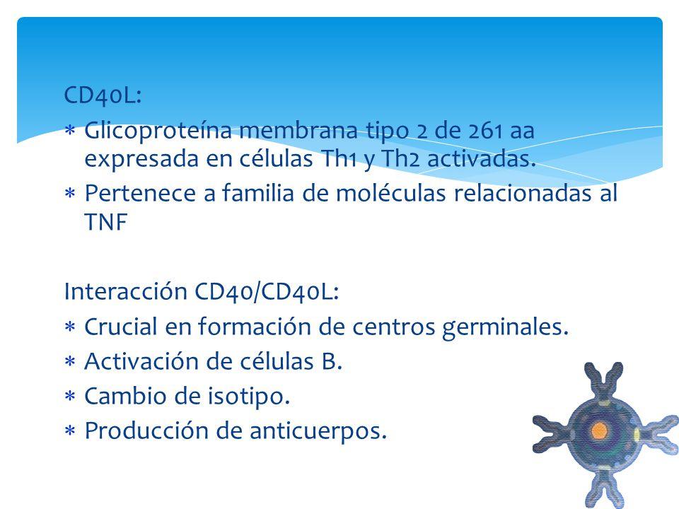 CD40L: Glicoproteína membrana tipo 2 de 261 aa expresada en células Th1 y Th2 activadas. Pertenece a familia de moléculas relacionadas al TNF Interacc