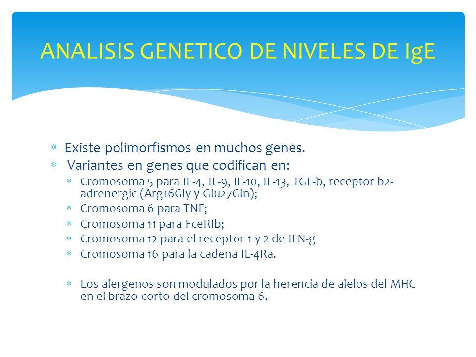 Existe polimorfismos en muchos genes. Variantes en genes que codifican en: Cromosoma 5 para IL-4, IL-9, IL-10, IL-13, TGF-b, receptor b2- adrenergic (