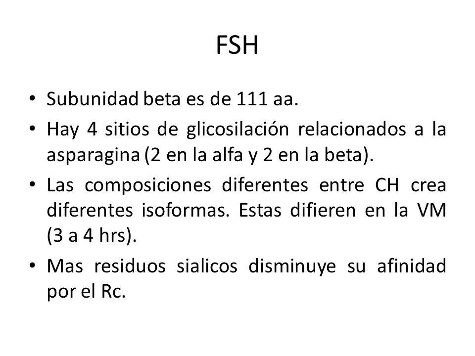 FSH Subunidad beta es de 111 aa. Hay 4 sitios de glicosilación relacionados a la asparagina (2 en la alfa y 2 en la beta). Las composiciones diferente