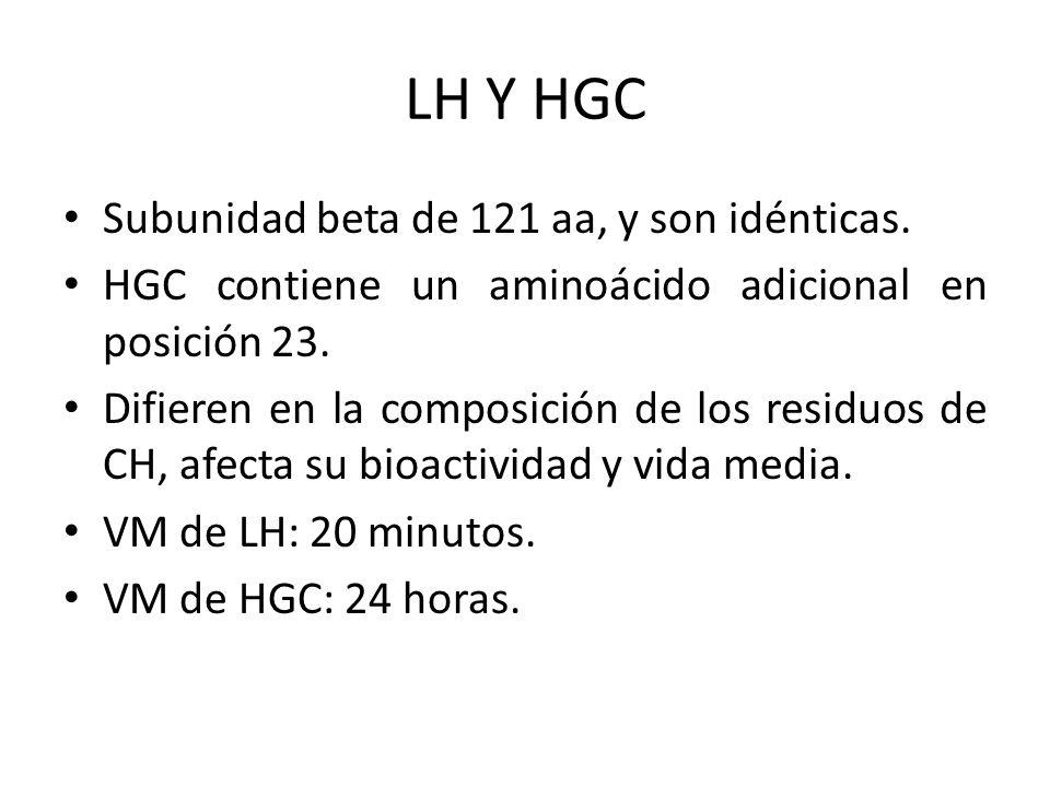 LH Y HGC Subunidad beta de 121 aa, y son idénticas. HGC contiene un aminoácido adicional en posición 23. Difieren en la composición de los residuos de