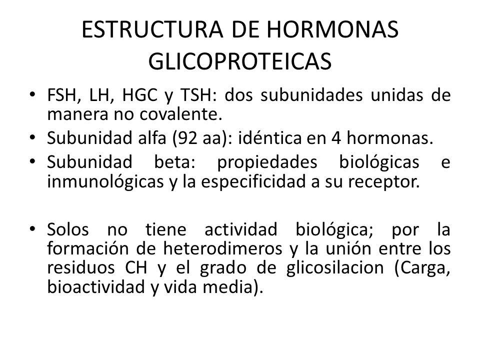 ESTRUCTURA DE HORMONAS GLICOPROTEICAS FSH, LH, HGC y TSH: dos subunidades unidas de manera no covalente. Subunidad alfa (92 aa): idéntica en 4 hormona