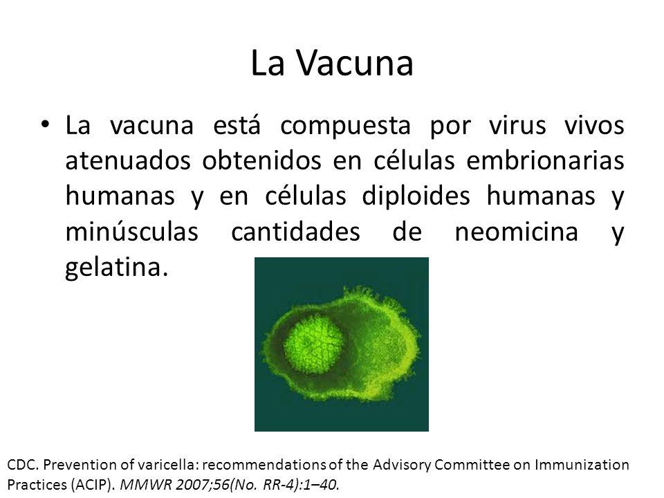 Edad de Vacunación CDC.
