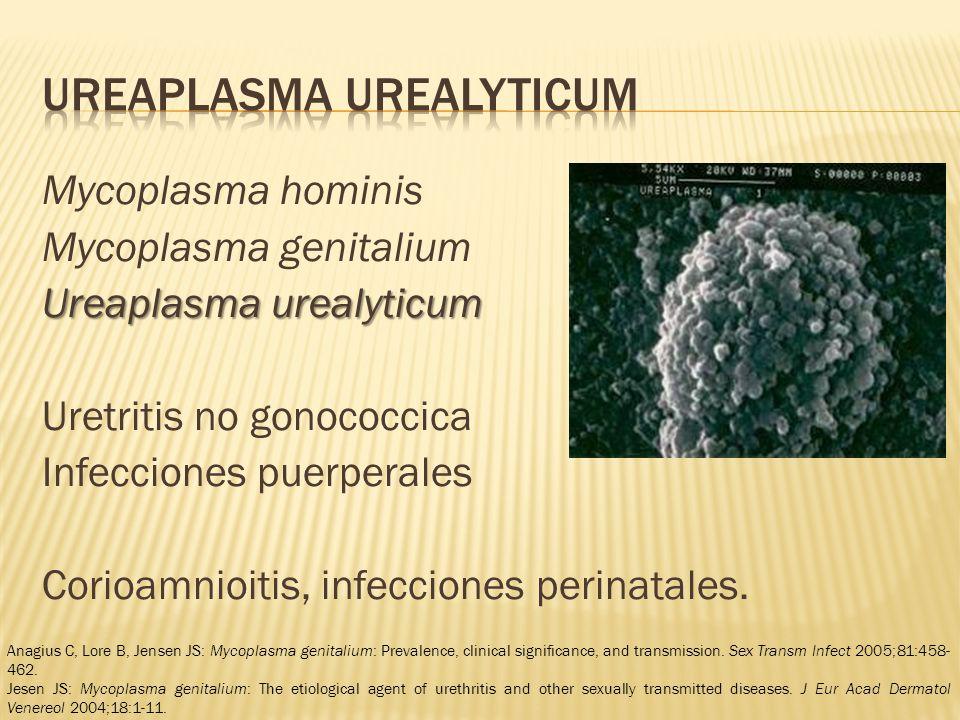 Mycoplasma hominis Mycoplasma genitalium Ureaplasma urealyticum Uretritis no gonococcica Infecciones puerperales Corioamnioitis, infecciones perinatales.