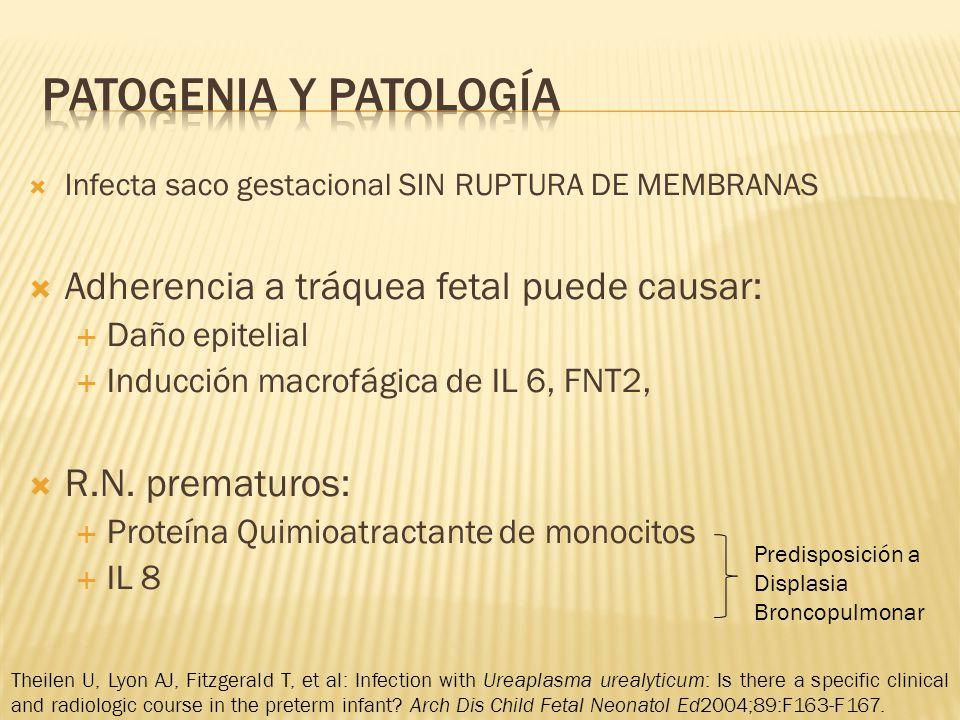 Infecta saco gestacional SIN RUPTURA DE MEMBRANAS Adherencia a tráquea fetal puede causar: Daño epitelial Inducción macrofágica de IL 6, FNT2, R.N.