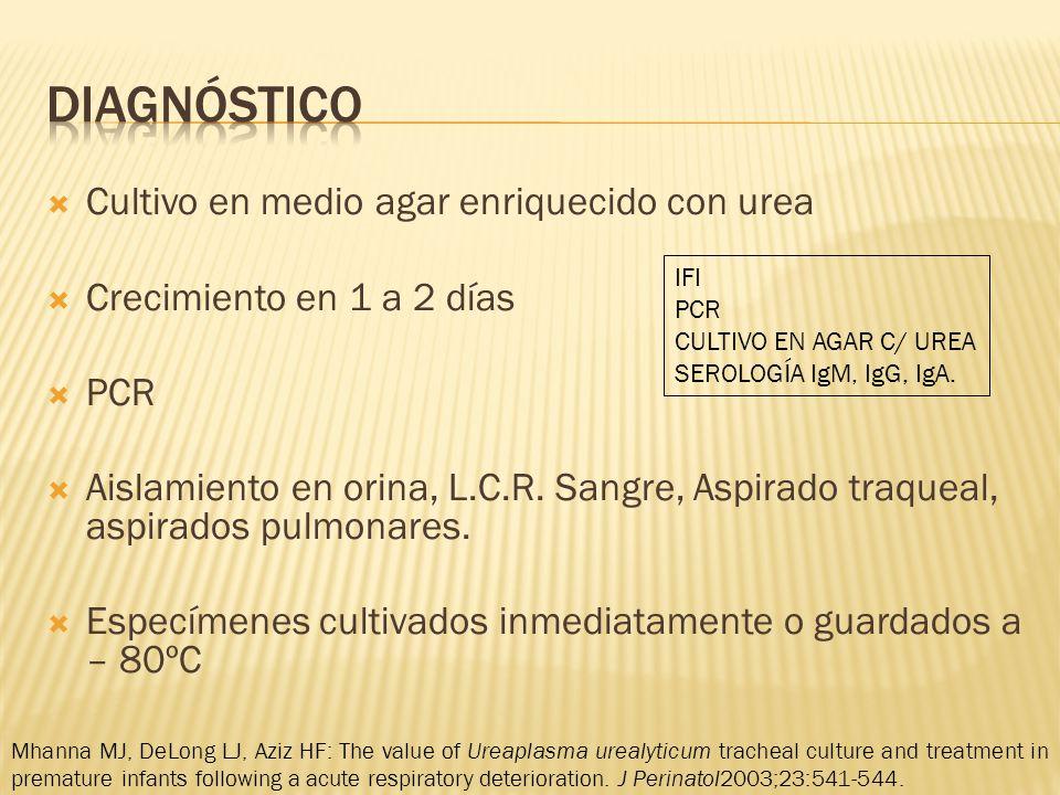 Cultivo en medio agar enriquecido con urea Crecimiento en 1 a 2 días PCR Aislamiento en orina, L.C.R.