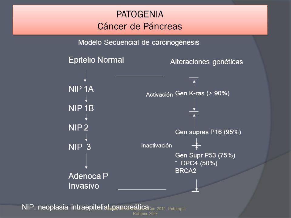 PATOGENIA Cáncer de Páncreas Epitelio Normal NlP 1A NIP 1B NIP 2 NIP 3 Adenoca P Invasivo NIP: neoplasia intraepitelial pancreática Gen K-ras (> 90%)