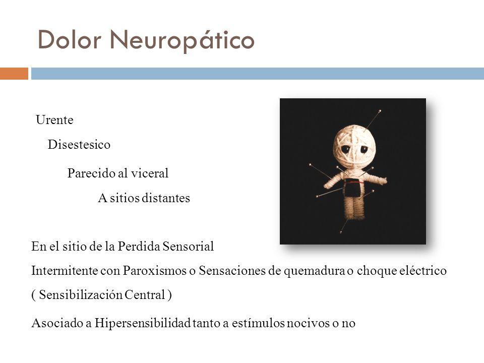 Urente Disestesico Parecido al viceral A sitios distantes En el sitio de la Perdida Sensorial Intermitente con Paroxismos o Sensaciones de quemadura o choque eléctrico ( Sensibilización Central ) Asociado a Hipersensibilidad tanto a estímulos nocivos o no Dolor Neuropático