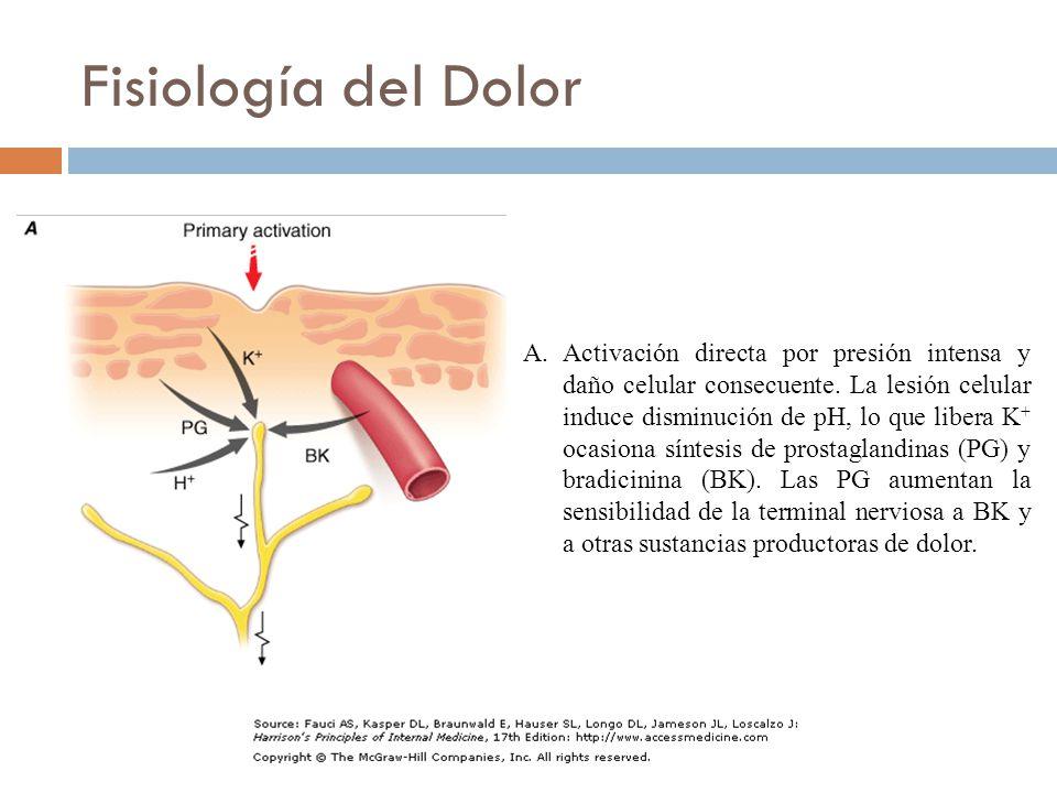 A.Activación directa por presión intensa y daño celular consecuente.