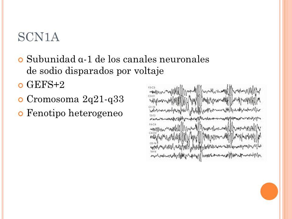 SCN1A Subunidad α-1 de los canales neuronales de sodio disparados por voltaje GEFS+2 Cromosoma 2q21-q33 Fenotipo heterogeneo