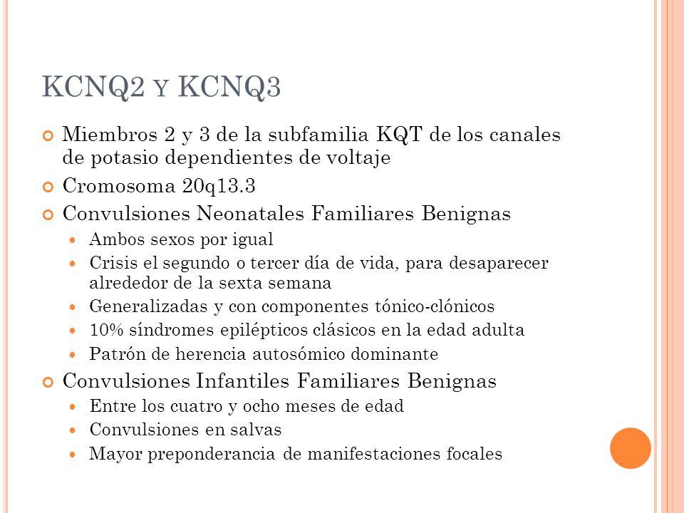 KCNQ2 Y KCNQ3 Miembros 2 y 3 de la subfamilia KQT de los canales de potasio dependientes de voltaje Cromosoma 20q13.3 Convulsiones Neonatales Familiares Benignas Ambos sexos por igual Crisis el segundo o tercer día de vida, para desaparecer alrededor de la sexta semana Generalizadas y con componentes tónico-clónicos 10% síndromes epilépticos clásicos en la edad adulta Patrón de herencia autosómico dominante Convulsiones Infantiles Familiares Benignas Entre los cuatro y ocho meses de edad Convulsiones en salvas Mayor preponderancia de manifestaciones focales
