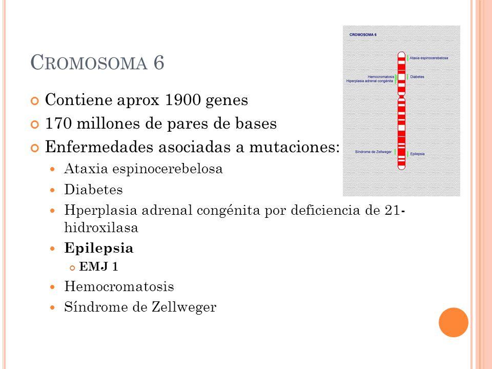 C ROMOSOMA 6 Contiene aprox 1900 genes 170 millones de pares de bases Enfermedades asociadas a mutaciones: Ataxia espinocerebelosa Diabetes Hperplasia adrenal congénita por deficiencia de 21- hidroxilasa Epilepsia EMJ 1 Hemocromatosis Síndrome de Zellweger