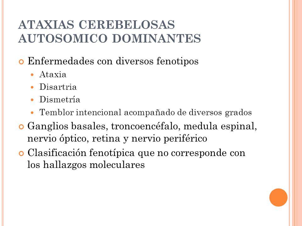ATAXIAS CEREBELOSAS AUTOSOMICO DOMINANTES Enfermedades con diversos fenotipos Ataxia Disartria Dismetría Temblor intencional acompañado de diversos grados Ganglios basales, troncoencéfalo, medula espinal, nervio óptico, retina y nervio periférico Clasificación fenotípica que no corresponde con los hallazgos moleculares