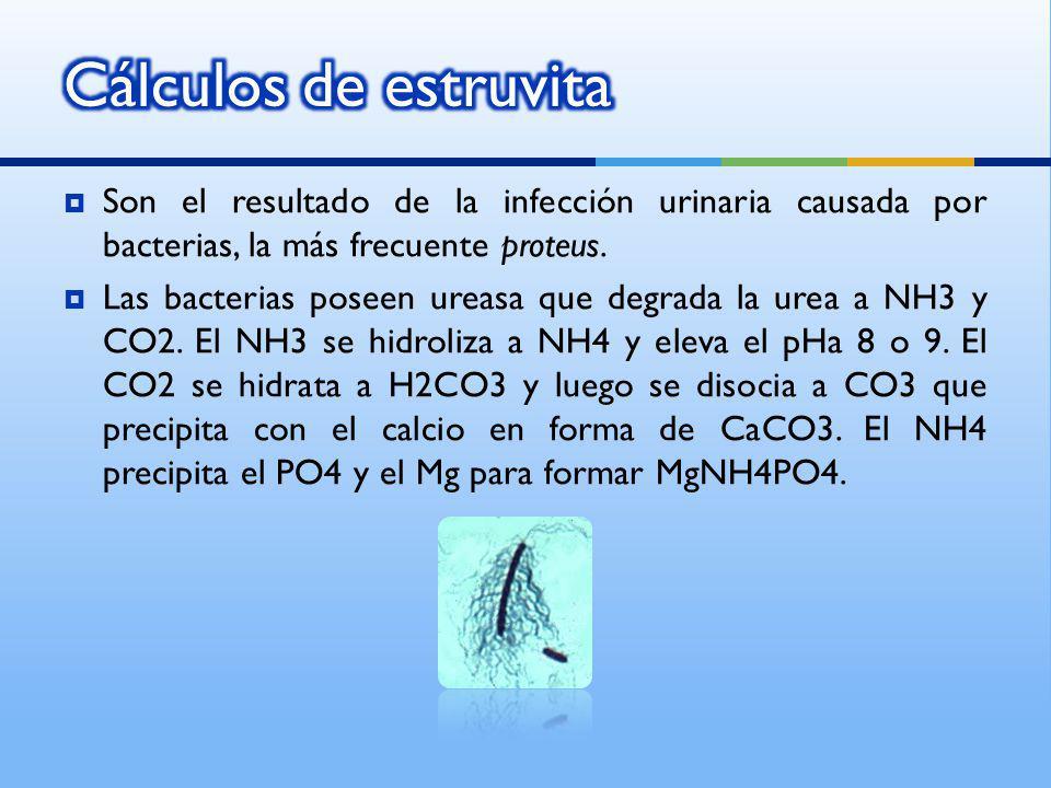Son el resultado de la infección urinaria causada por bacterias, la más frecuente proteus. Las bacterias poseen ureasa que degrada la urea a NH3 y CO2