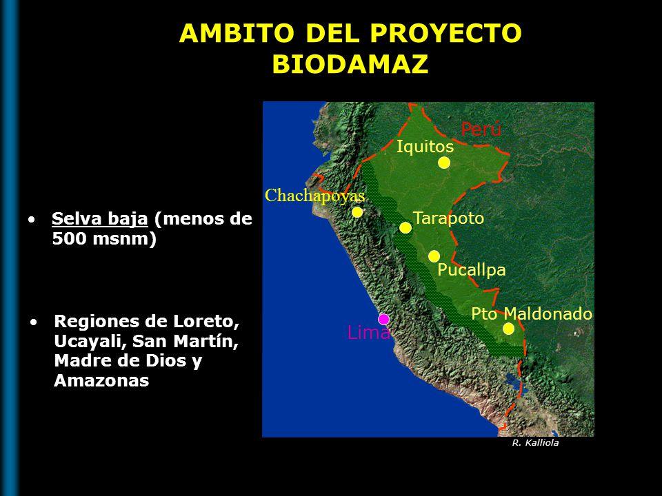 AMBITO DEL PROYECTO BIODAMAZ Selva baja (menos de 500 msnm) Regiones de Loreto, Ucayali, San Martín, Madre de Dios y Amazonas Perú Iquitos Pucallpa Ta