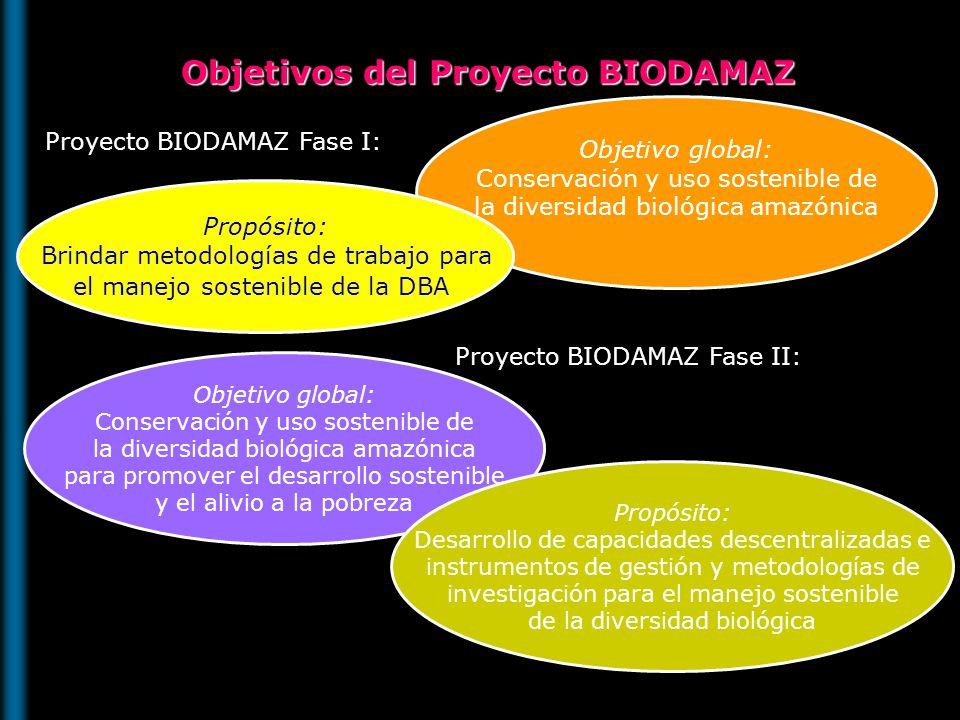 BIODAMAZ Fase II Conservación y uso sostenible de la DB en la Amazonía Peruana para promover el desarrollo sostenible y la mitigación de la pobreza OBJETIVO Desarrollar capacidades descentralizadas, instrumentos de gestión y metodologías de investigación para el manejo sostenible de la DB en la Amazonía Peruana PROPOSITO C1 C1 Fortalecimiento de la Gestión ambiental regional C2 C2 Desarrollo de conocimiento BF y SE Para la AP C3 C3 Gestión local, manejo comunitario y desarrollo de alternativas Económicas sotenibles en la ZRAM y el JBAH COMPONENTES CA : Gestión