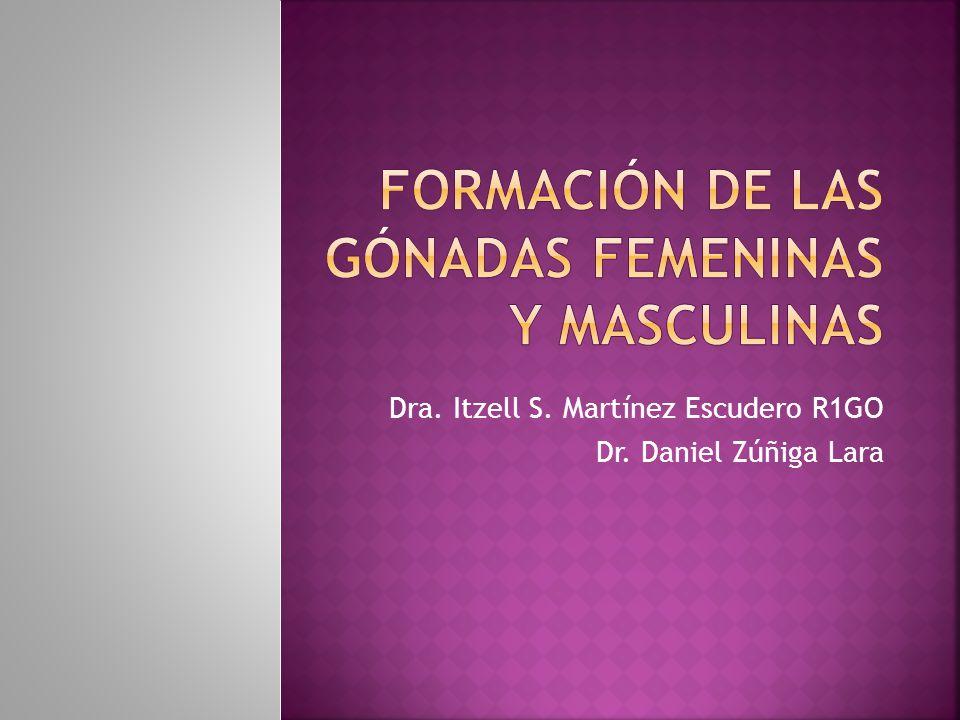 Dra. Itzell S. Martínez Escudero R1GO Dr. Daniel Zúñiga Lara