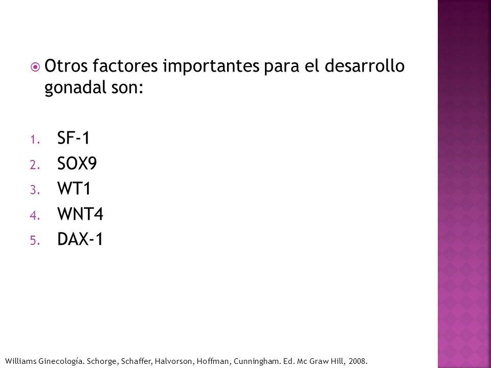 Otros factores importantes para el desarrollo gonadal son: 1. SF-1 2. SOX9 3. WT1 4. WNT4 5. DAX-1 Williams Ginecología. Schorge, Schaffer, Halvorson,