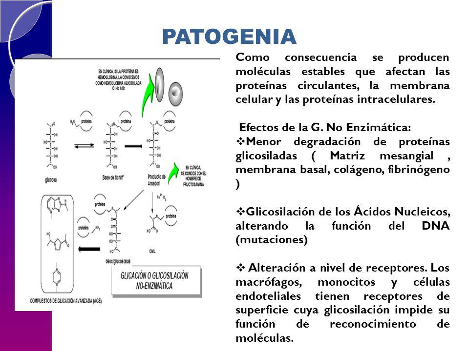 Como consecuencia se producen moléculas estables que afectan las proteínas circulantes, la membrana celular y las proteínas intracelulares. Efectos de