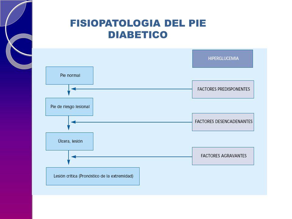 FISIOPATOLOGIA DEL PIE DIABETICO