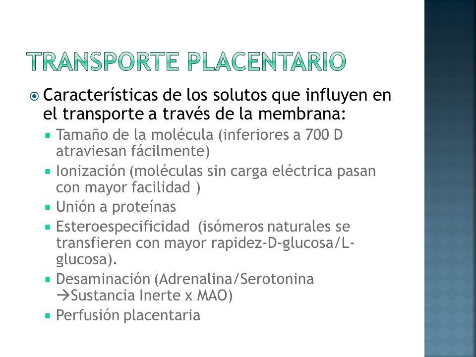 Características de los solutos que influyen en el transporte a través de la membrana: Tamaño de la molécula (inferiores a 700 D atraviesan fácilmente)