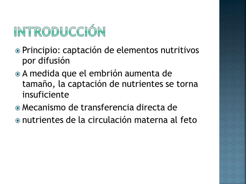 Principio: captación de elementos nutritivos por difusión A medida que el embrión aumenta de tamaño, la captación de nutrientes se torna insuficiente