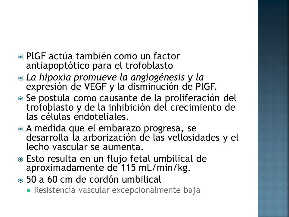 PlGF actúa también como un factor antiapoptótico para el trofoblasto La hipoxia promueve la angiogénesis y la expresión de VEGF y la disminución de Pl