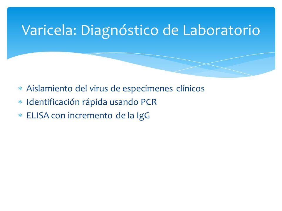 Varicela: Diagnóstico de Laboratorio Aislamiento del virus de especimenes clínicos Identificación rápida usando PCR ELISA con incremento de la IgG
