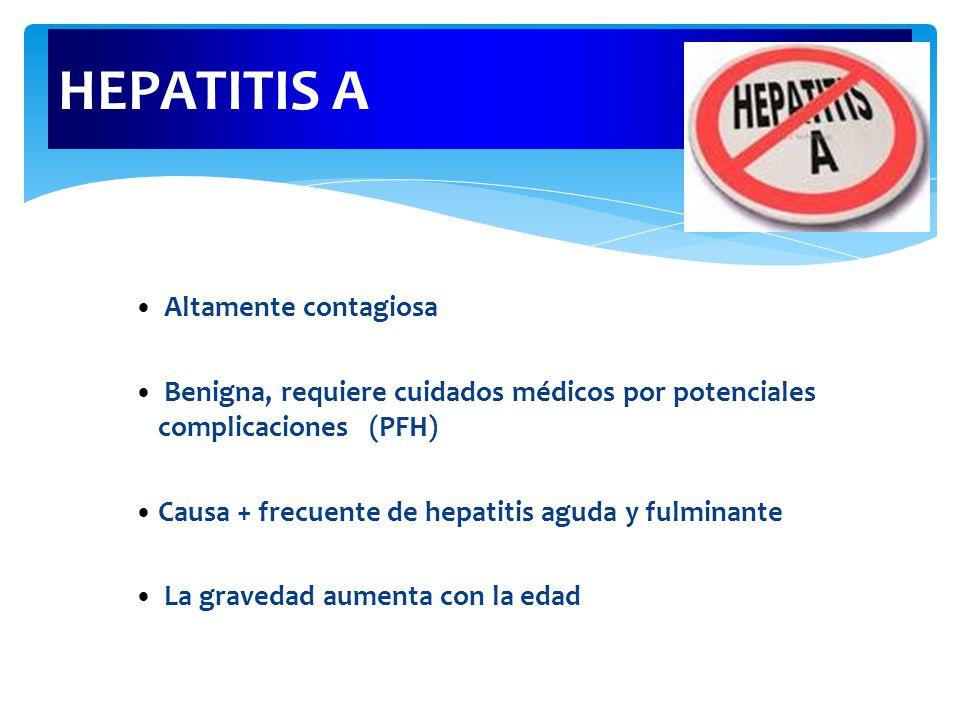 HEPATITIS A Altamente contagiosa Benigna, requiere cuidados médicos por potenciales complicaciones (PFH) Causa + frecuente de hepatitis aguda y fulminante La gravedad aumenta con la edad